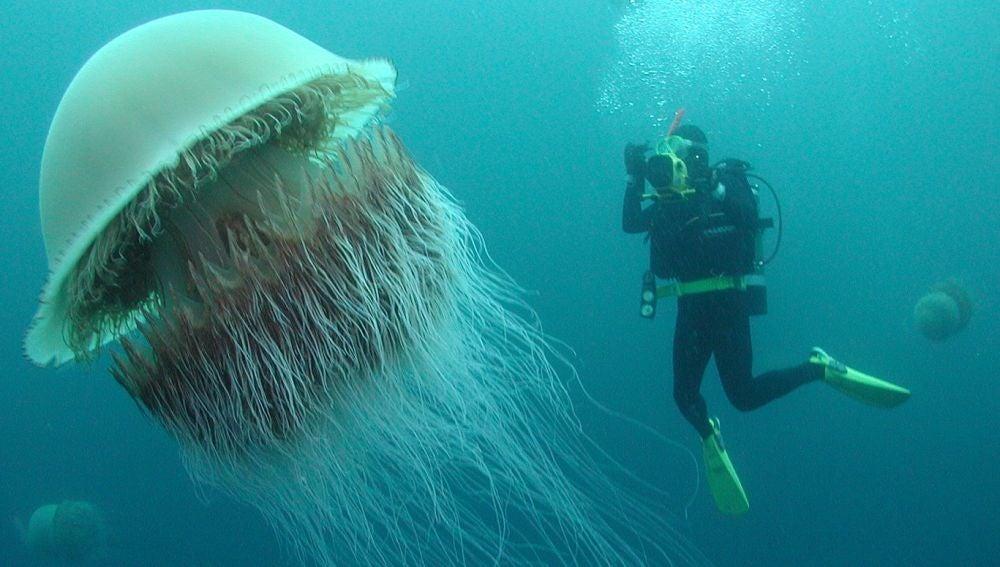Medusa Nomura