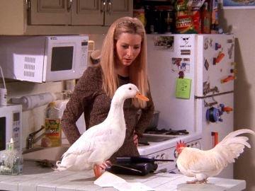 ¿Te acuerdas de los animales que salieron en 'Friends'?
