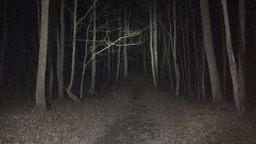 Bosque en la oscuridad