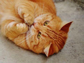 Se acabó el aburrimiento para tus gatos: El juguete perfecto para tus mascotas se hace realidad
