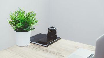Planta en el lugar de trabajo